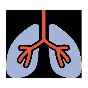 icon Elektrokardiogramm (EKG), Belastungs-EKG, Lungenfunktion und 24 Stunden-Blutdruck